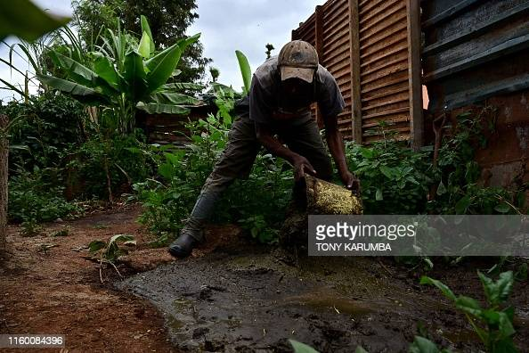 A farmer puts cow dung into a fixed-dome biogas 'digester' at the
