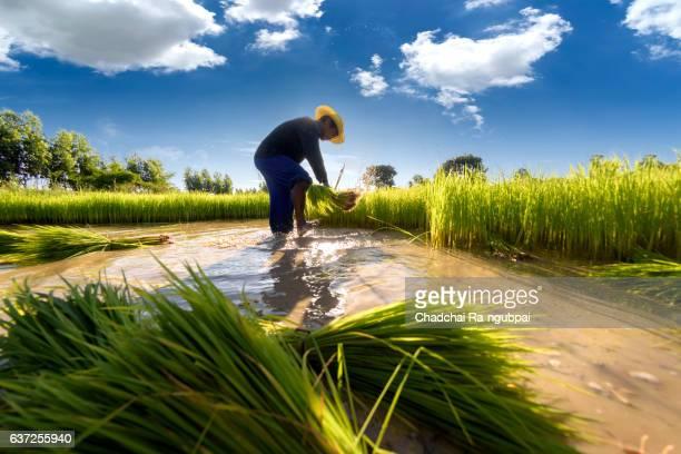 farmer Rice to kick