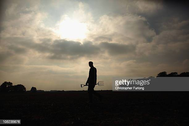 Farmer Robin Cropper checks the quality of his potatoes before harvest on October 13 2010 in Ormskirk England During national potato week many...