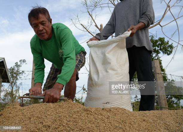 A farmer scoops rice grains which they dried after hastily harvesting them prior to the arrival of Super Typhoon Mangkhut in Alcala Cagayan province...