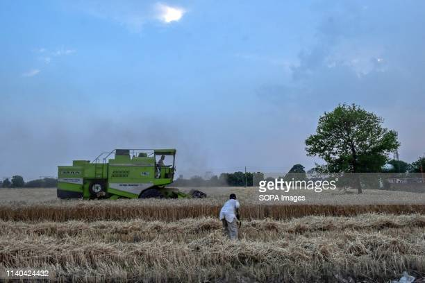 A farmer seen harvesting wheat at a field in Punjab Harvesting of wheat has begun in India one of the world's largest producers of the crop...