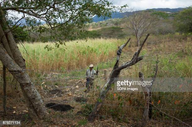 A farmer seen in the fields of Miraflores Although Nicaragua struggled to recover from the devastation caused by the civil war of the 1980s in the...