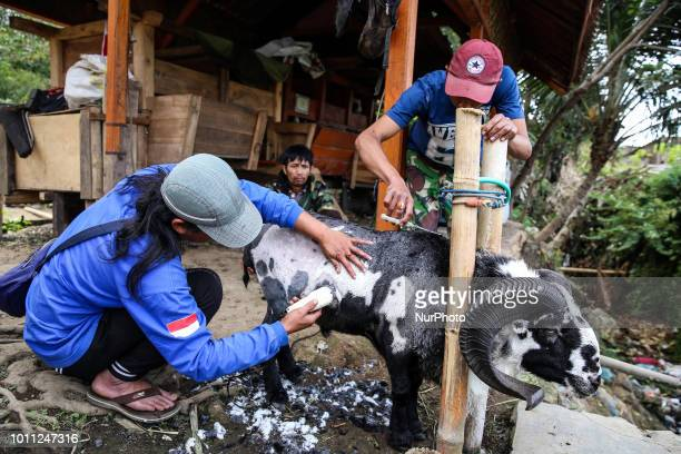 Farmer sheep are shorn by professional shearers on his farms at Mekar Jaya village in Garut West Java Indonesia on Friday August 3 2018