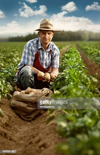farmer show his organic potato harvest at field - rauwe aardappel stockfoto's en -beelden