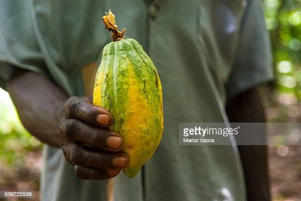 Farmer showing a cocoa pod