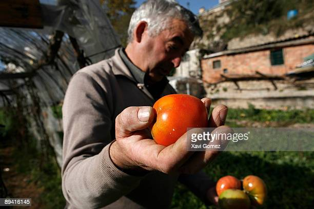Farmer showing his tomatoes