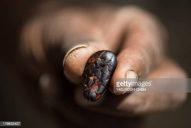 A farmer shows a dried cacao bean in a farm in Sao Felix do Xingu Para state northern Brazil on August 7 2013 AFP PHOTO / YASUYOSHI CHIBA