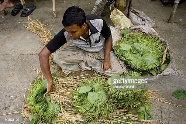A farmer shows his betel leaf for sell at a village market in Meherpur Bangladesh June 28 2007 Betel leaf or Pan is a tropical creeper belonging to...