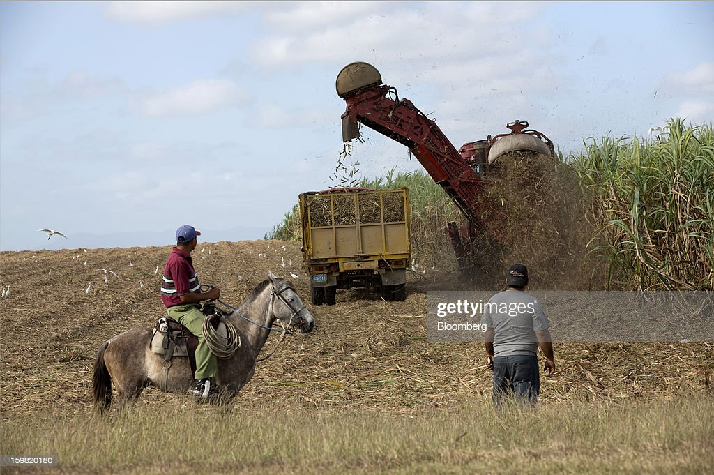 A farmer sits on his horse and watches a harvesting machine cut sugarcane plants in a field near Jatibonico, Cuba, on Sunday, Jan. 13, 2013. Sugar prices fell 16 percent last year as global supplies are forecast to outpace demand for a third year in 2012-13, according to the London-based International Sugar Organization. Photographer: Andrey Rudakov/Bloomberg via Getty Images