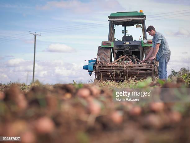 Farmer sorting crop of organic potatoes