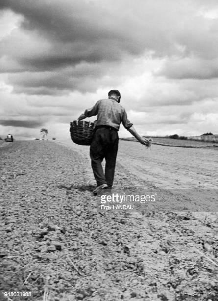 Farmer sowing seeds in a field Paysans semant des graines dans un champ