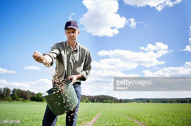 Farmer sowing seeds in field