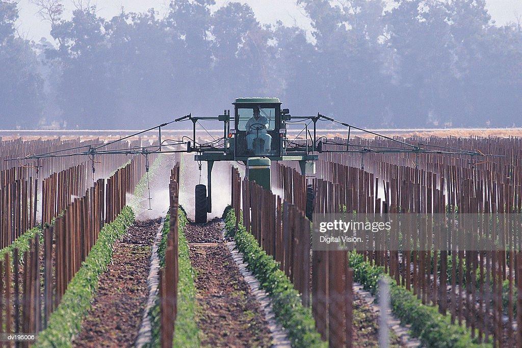 Farmer spraying crops : Stock Photo