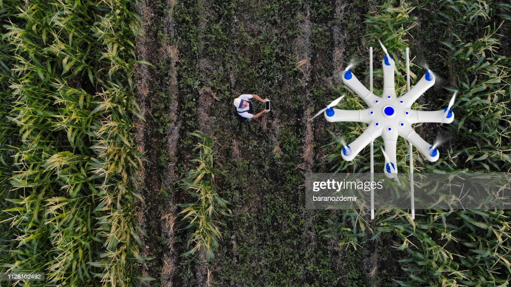 Farmer Spraying His Crops Using A Drone Stock Photo - Getty