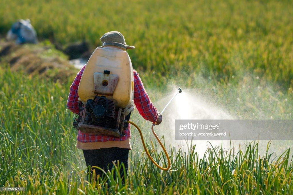Farmer spraying pesticide. : Stock Photo