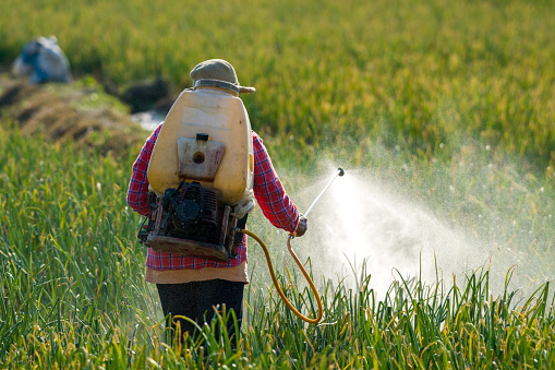 Farmer spraying pesticide. - gettyimageskorea