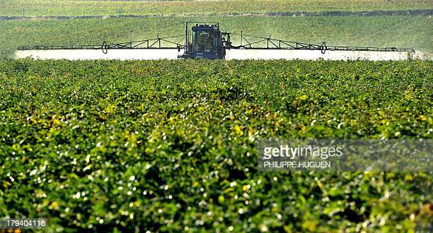 A farmer sprays his beet field with phytosanitary products on September 3 2013 in Godewaersvelde northern France AFP PHOTO PHILIPPE HUGUEN