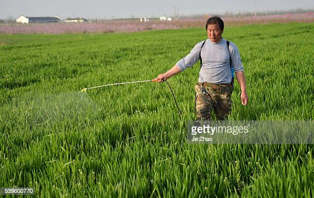 A farmer sprays insecticide in a field in Xiangyang Hubei central China on 28th March 2015 THE Asian Development Bank expected China's economic...