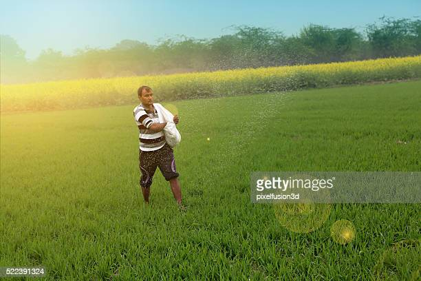 Farmer Spreading fertilizer in the Field wheat