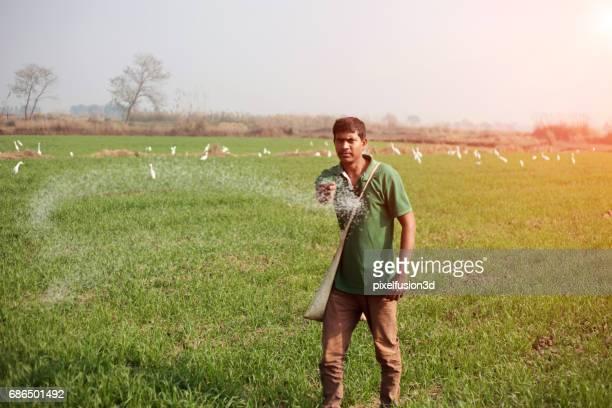 farmer, die verbreitung von harnstoff auf dem gebiet der weizenernte - gift hand stock-fotos und bilder