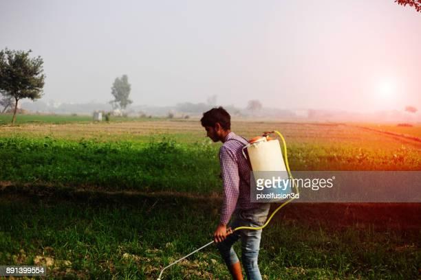 Farmer Spreads fertilizers in the Field
