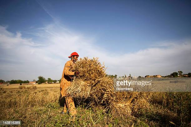 A farmer stacks wheat during a harvest in the village of Fatehganj in Punjab province Pakistan on Thursday May 3 2012 Pakistan is Asia's thirdlargest...