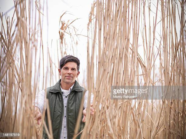 Farmer standing amongst Miscanthus crop, or Elephant grass, on biomass farm at harvest time