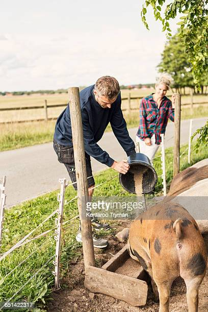 farmer standing besides woman feeding pigs at farm - pigs trough stock pictures, royalty-free photos & images