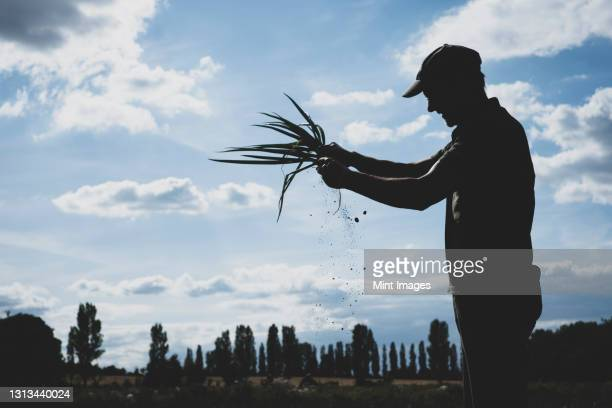 farmer standing in a field holding freshly picked spring onions. - farmer stock pictures, royalty-free photos & images
