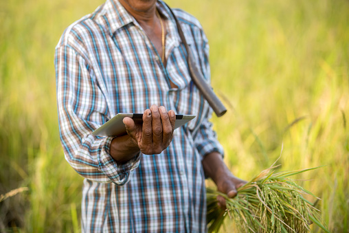 Farmer standing in a wheat field and looking at tablet - gettyimageskorea