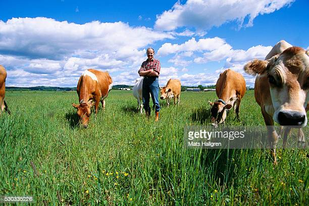 Farmer standing next to cows