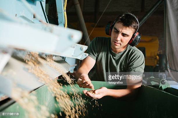 farmer stands next to machine, which separates grains for seeds - cereal plant stock pictures, royalty-free photos & images