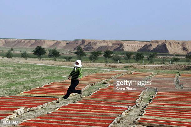 A farmer suns harvested medlars at a medlar farm on July 24 2005 in Tongxin County of Ningxia Hui Autonomous Region north China Ningxia is known as...