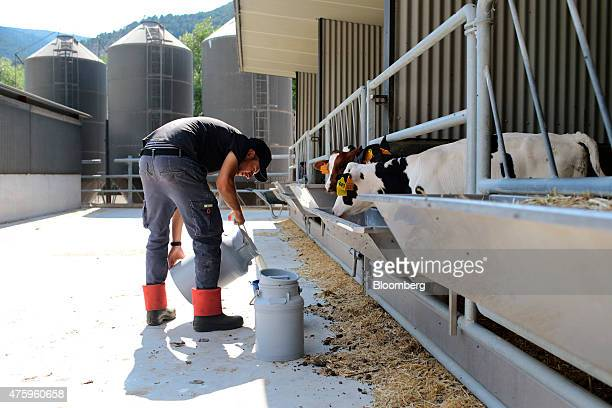A farmer supplies fresh milk to calves at the Blanca From The Pyrenees dairy farm partnered with Ponderosa Holsteins in Els Hostalets de Tost Spain...