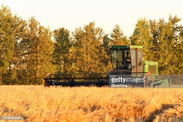 A farmer swathes barley on a farm near Hodgson Manitoba Canada on Thursday Sept 10 2020 A recentcrop tourpegged Canada's harvest at an alltime high...