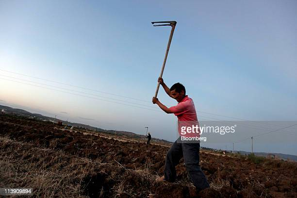 A farmer swings a hoe and prepares his fields at sunset near Chuxiong Yunnan province China on Saturday May 7 2011 China's consumer prices may have...