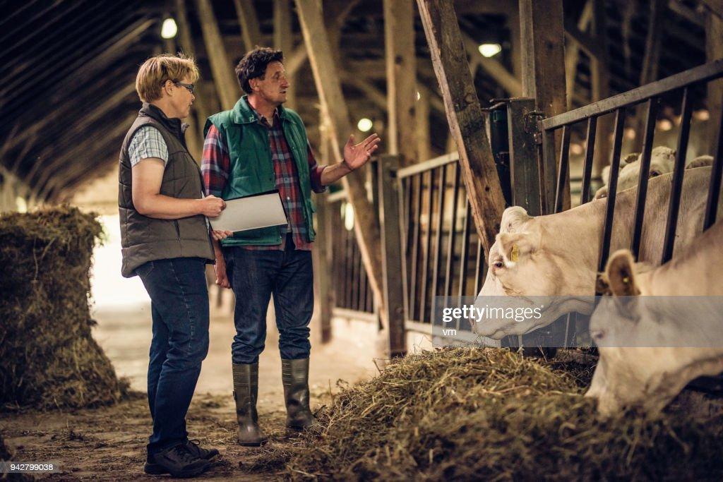 Farmer talking to inspector in a barn : Stock Photo