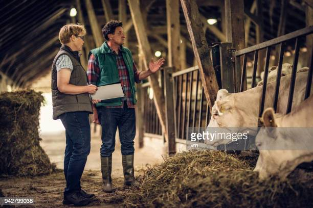Farmer talking to inspector in a barn