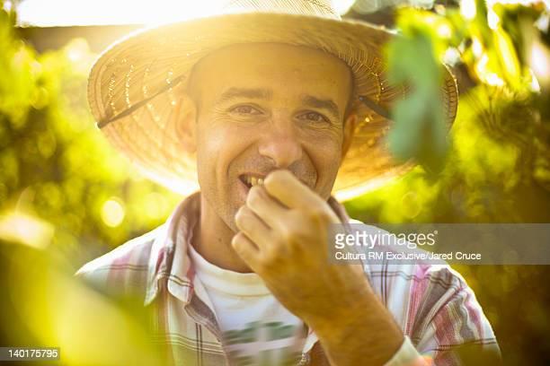 Farmer tasting grapes in vineyard