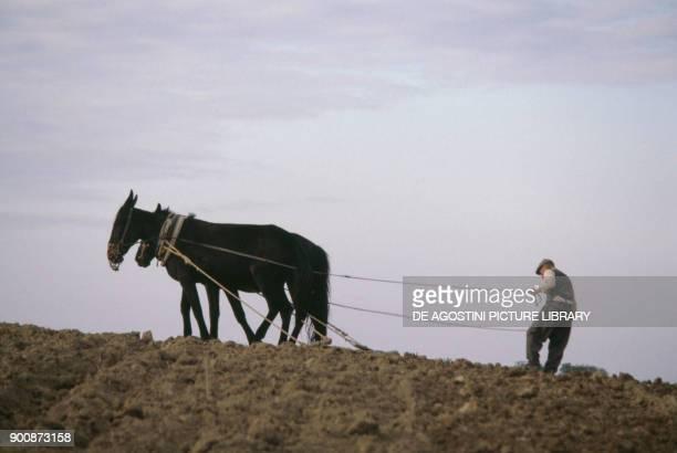 Farmer tending the land with a horsedrawn plow Maratea Basilicata Italy