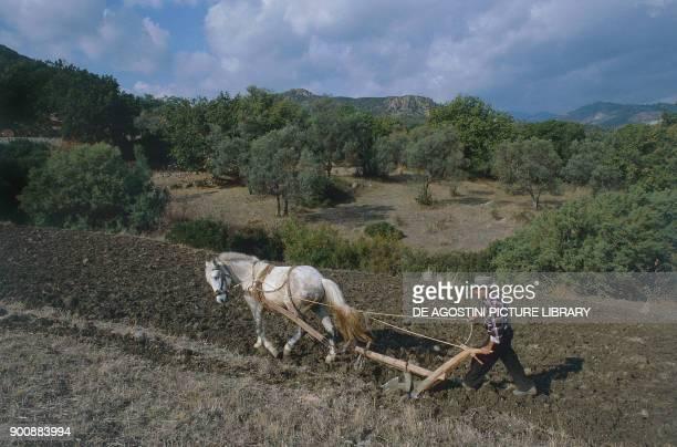 Farmer tending the land with a horsedrawn plow near Caulonia Calabria Italy