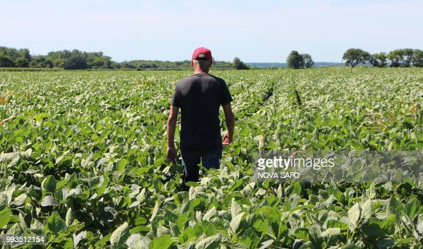 Farmer Terry Davidson walks through his soy fields July 6 in Harvard Illinois the same day China imposed retaliatory tariffs aimed at the US soybean...