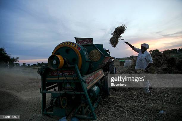 A farmer threshes wheat during a harvest in the village of Fatehganj in Punjab province Pakistan on Thursday May 3 2012 Pakistan is Asia's...