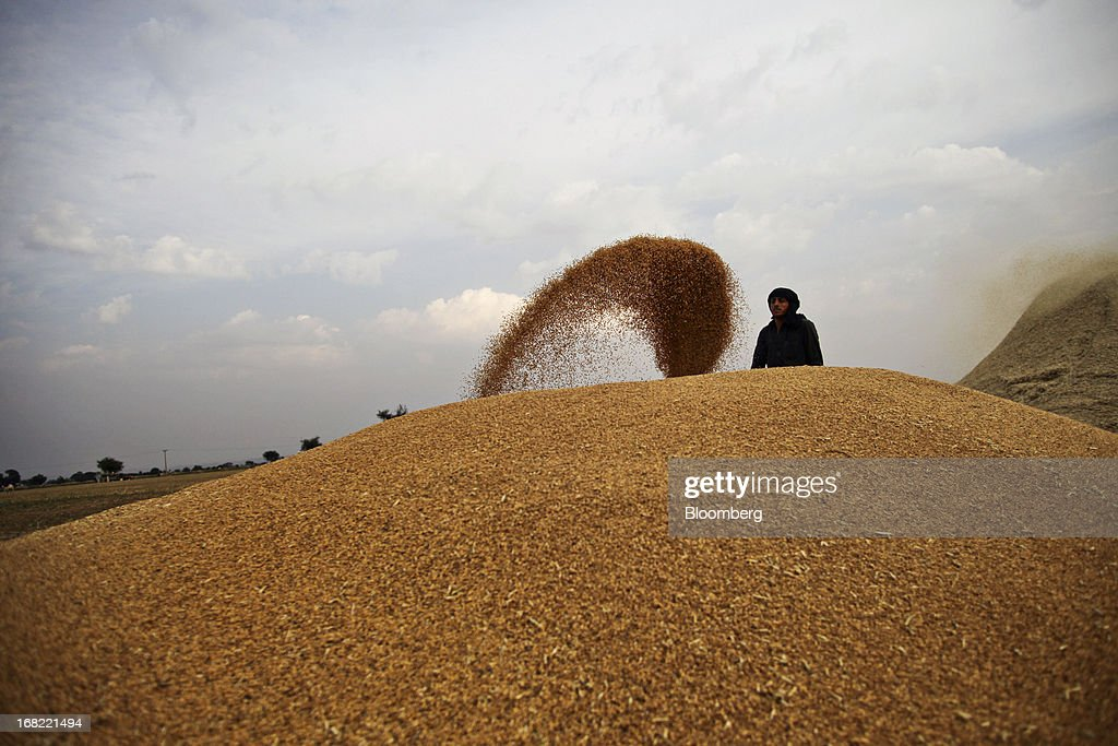 A farmer throws grain from a bowl onto a mound of wheat during a harvest in Fatehganj district of Punjab province, Pakistan, on Sunday, May 5, 2013. Pakistan wheat output to increase this year, the U.S Department of Agriculture's Foreign Agricultural Service said in a report posted today on its website on April 4. Photographer: Asad Zaidi/Bloomberg via Getty Images