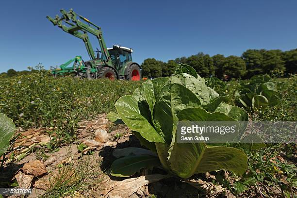Farmer Tobias Haack drives a tractor over 10000 heads of romaine iceberg and ten other types of lettuce in order to mulch them back into the ground...