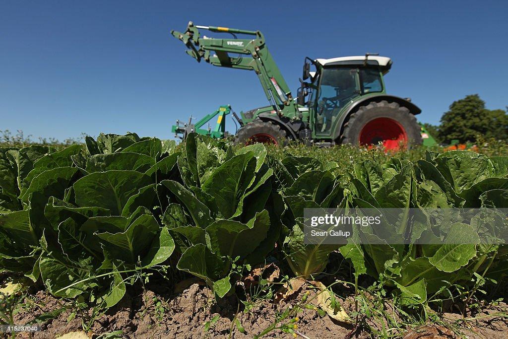Farmers Fear Ruin Following EHEC Outbreak : News Photo