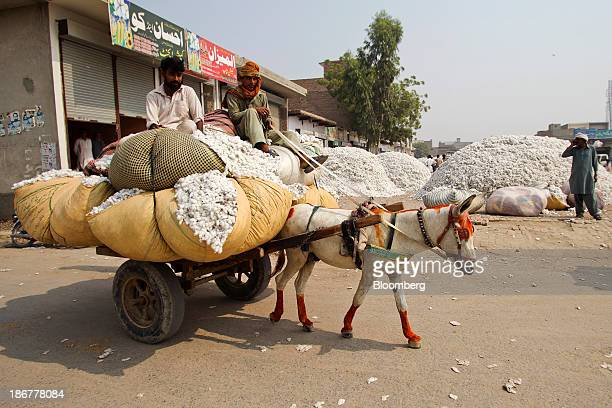A farmer transports cotton on a donkey cart to a market in the district of Lodhran Punjab province Pakistan on Thursday Oct 24 2013 Cotton imports by...