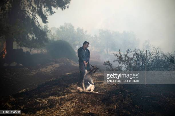 A farmer tries to save his goat during a forest fire in the village of Makrimalli on the island of Evia northeast of Athens on August 14 2019...