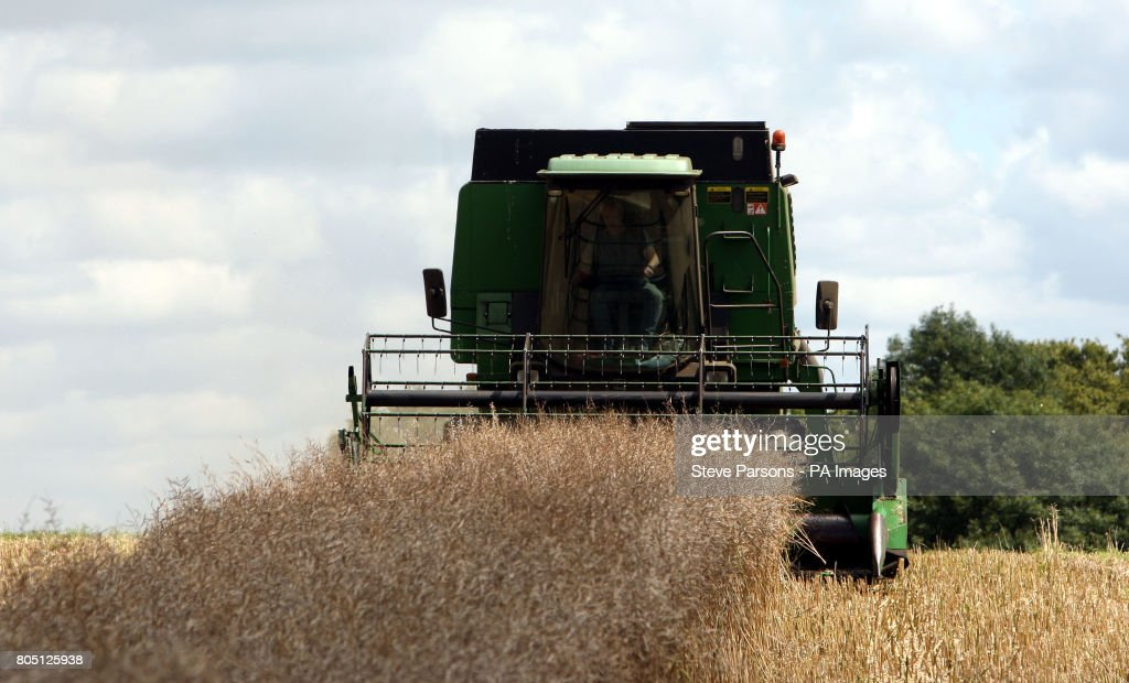 A farmer uses a combine harvester during the current dry