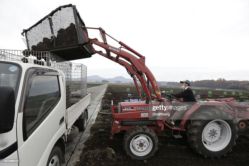 A farmer uses a Shibaura tractor to tip harvested konjac